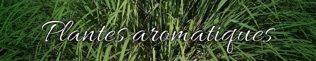 banner-plante-aromatique